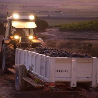 Tractor with grapes